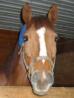 One of the happy horses boarded at Haycroft Stables.